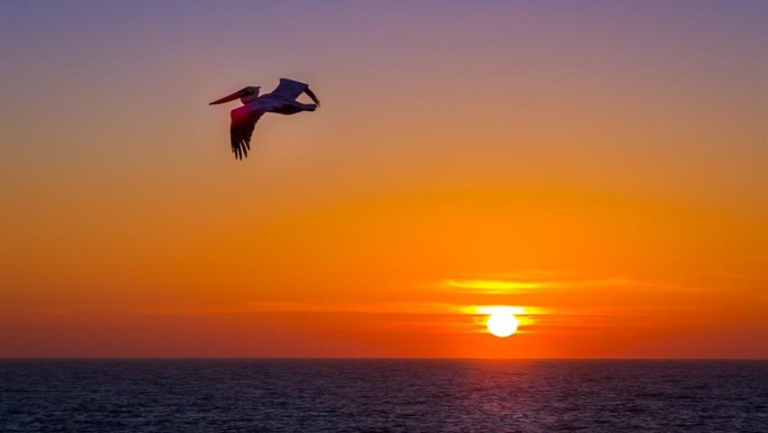 bird flying tiqy, Milbi Sunset