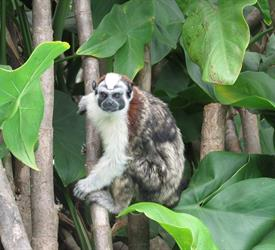 Monkey Islands and the Sloths Sanctuary Tour