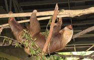 MONKEY ISLAND, Monkey Islands and the Sloths Sanctuary Tour