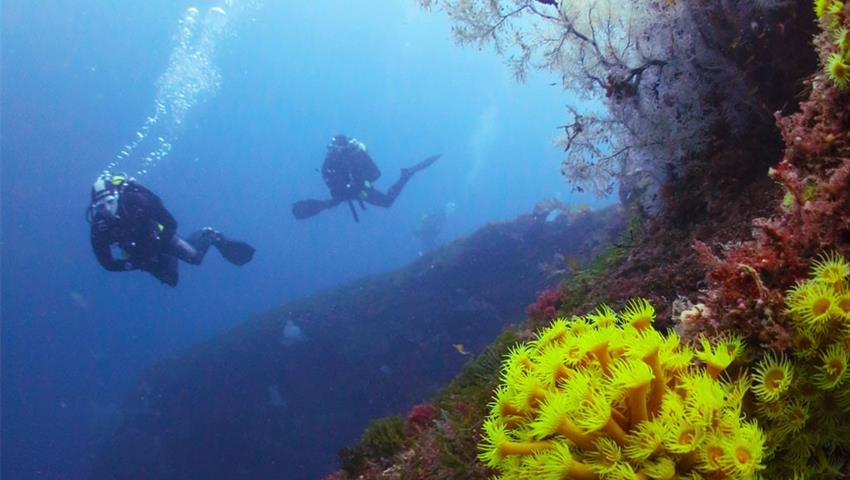 diving tiqy, Morning Double Dive Tour for Qualified Diver