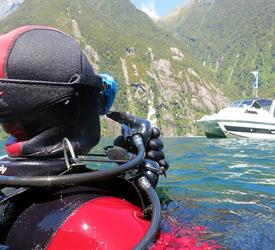 Morning Tour for First Time Diver , Diving Activities in Milford Sound, New Zealand