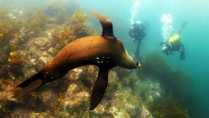 seal tiqy, Morning Tour for First Time Diver
