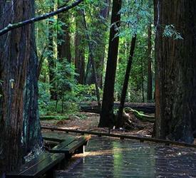 Muir Woods Tour to California's Redwoods