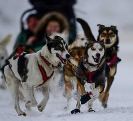 Narnia Dog Sled Tour, Dog Sledding Tours in Alberta, Canada