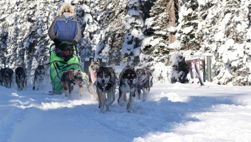 Snow Adventures, Narnia Dog Sled Tour