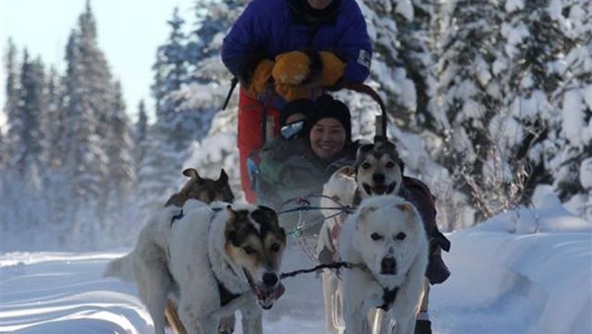 Snow, Narnia Dog Sled Tour