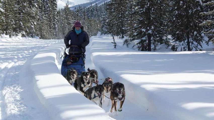 Dog Sled, Narnia Dog Sled Tour