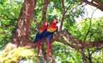 Birbs, National Parks Birdwatching Tour