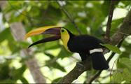 Tucan, National Parks Birdwatching Tour