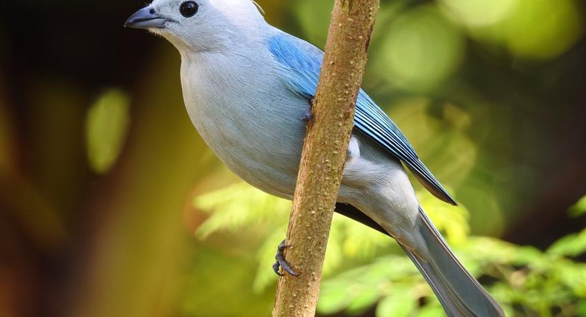 Bird, National Parks Birdwatching Tour