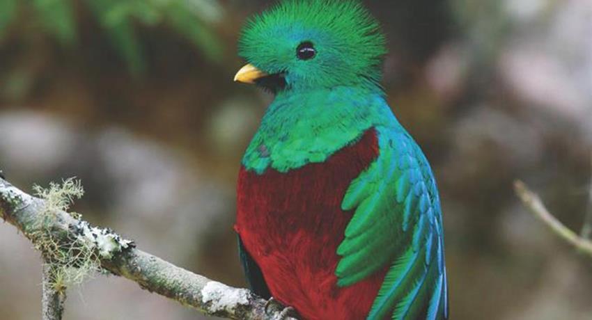 Quetzal, National Parks Birdwatching Tour