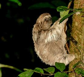Night Tour to Rainmaker Park, Adventure Tours in Costa Rica