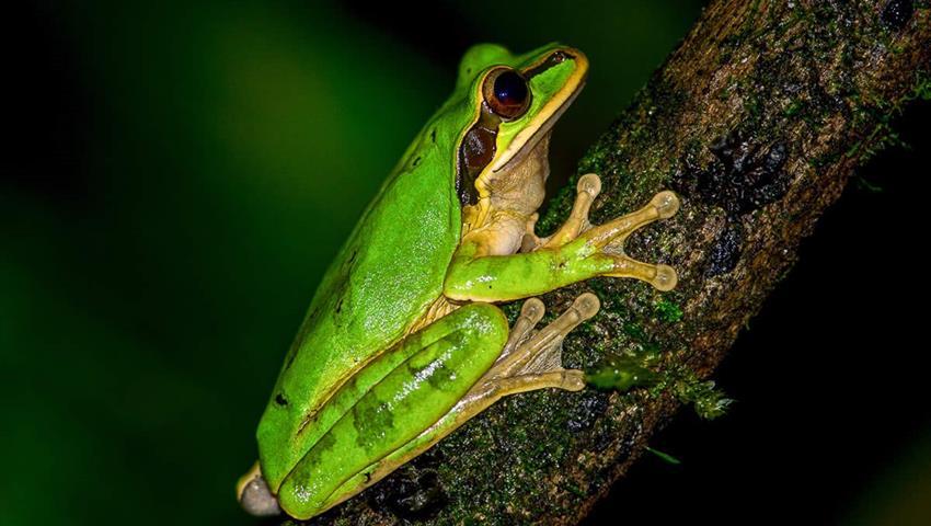 Beautiful Frog, Night Tour to Rainmaker Park