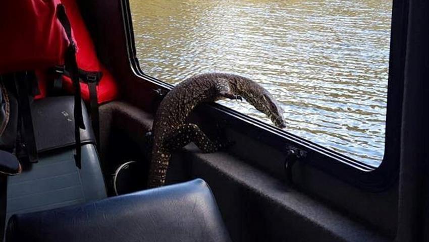 animal tiqy, Noosa Everglades Half Day Tour