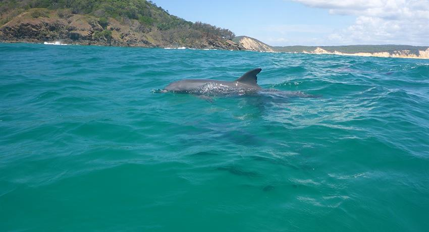 dolphin tiqy, Recorrido de Noosa hasta Rainbow Beach