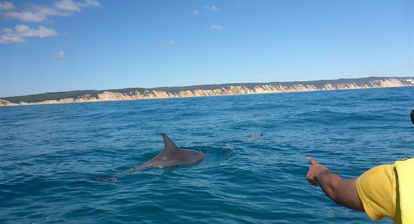 dolphin tiqy, Noosa to Rainbow Beach Tour