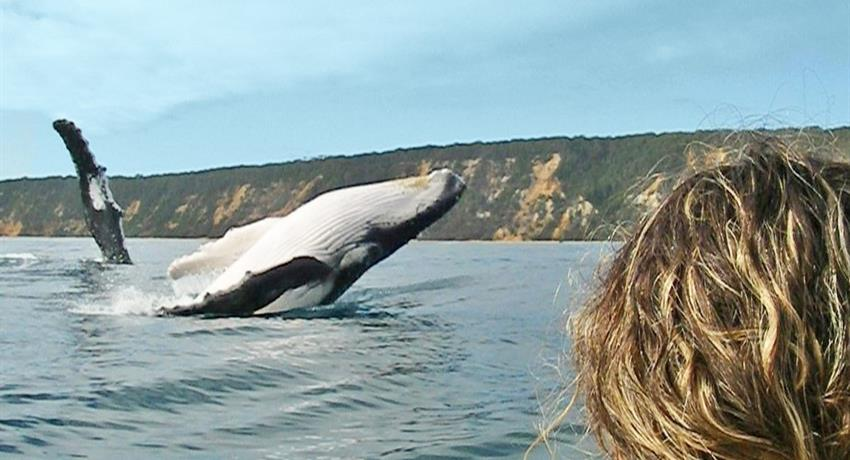 whale tiqy, Recorrido de Noosa hasta Rainbow Beach
