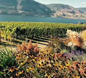 Okanagan Falls Experience, Food And Drink Tours in Canada
