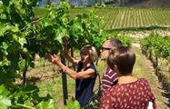Vineyards, Experiencia Okanagan Falls
