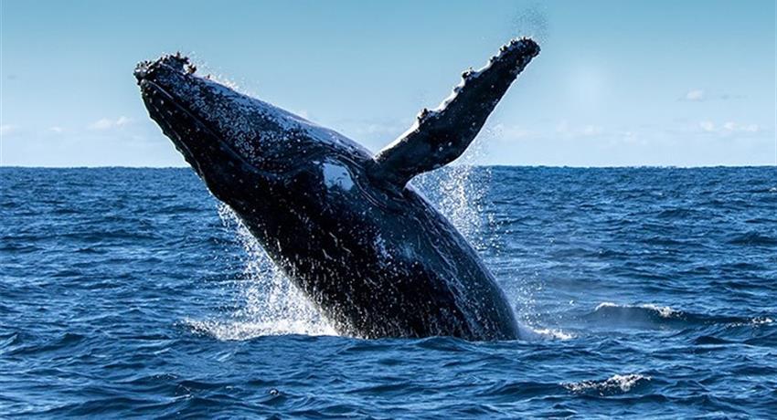 1, Panama Whale Watching Tour