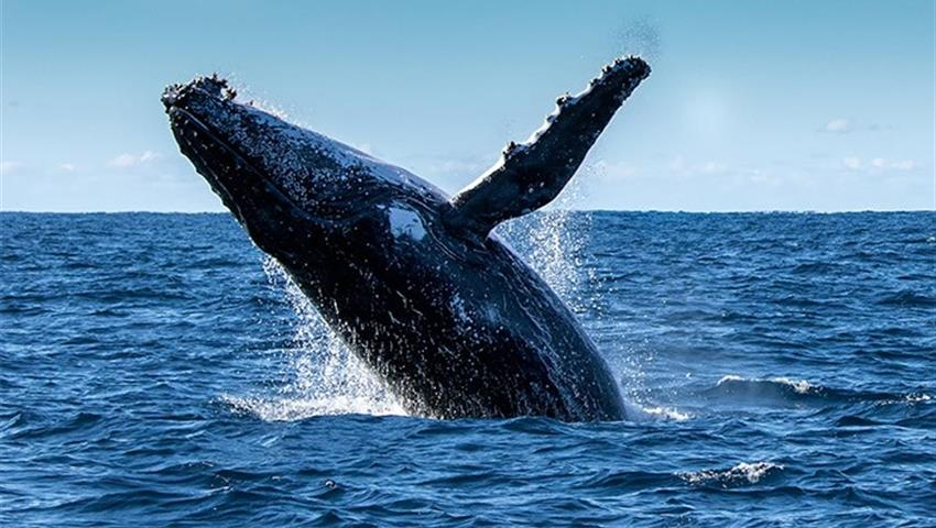 1, Panama Whale Watching Tour