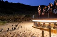 Penguin Parade Afternoon Wildlife Tour mirador, Penguin Parade Afternoon Wildlife Tour