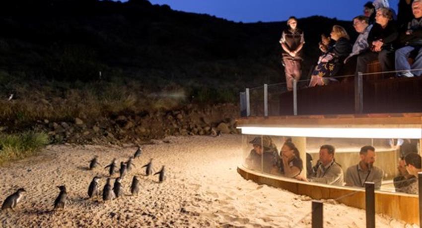Penguin Parade Afternoon Wildlife Tour mirador, Penguin Parade Afternoon Wildlife Tour