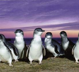 Phillip Island Tour, Wildlife Experiences in Australia