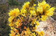 Pinnacles Sunset and Start Gazing Tour wildflowers, Pinnacles Sunset and Star Gazing Tour