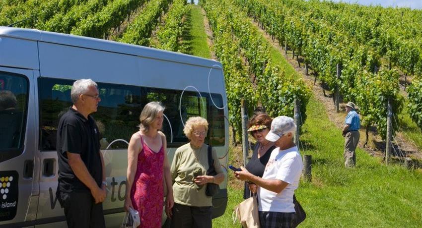 premium wine tiqy, Premium Views, Vines and Wines