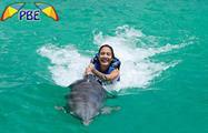 1, Dolphin Explorer Excursion