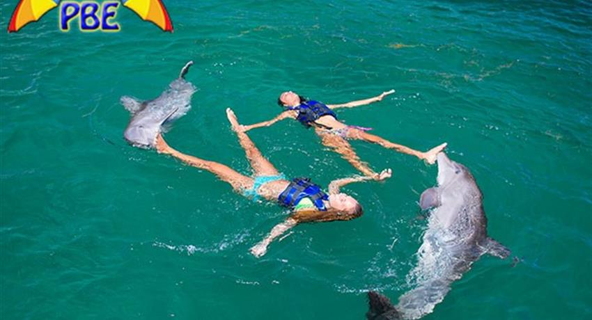 2, Dolphin Explorer Excursion