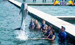 3, Dolphin Explorer Excursion