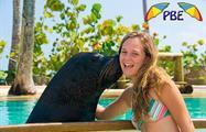 5, Dolphin Explorer Excursion