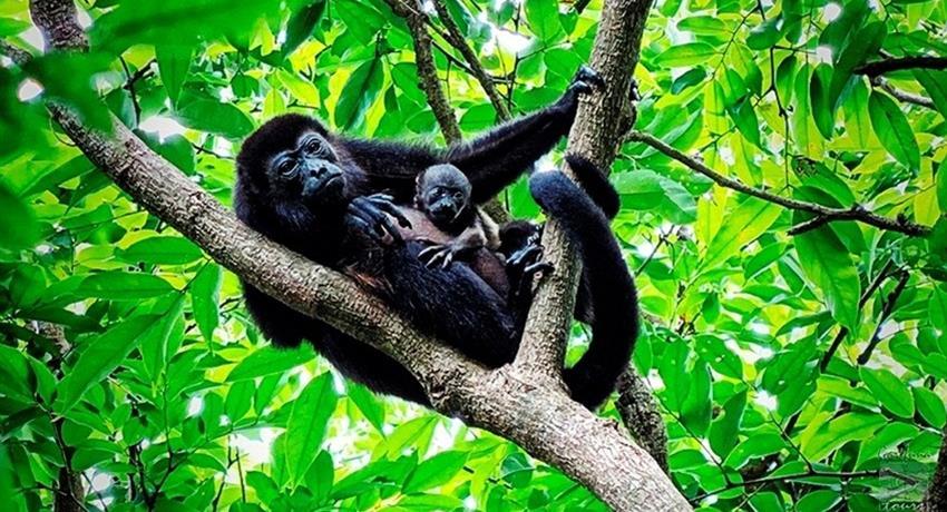 Punta Sal Monkeys, Punta Sal Beach