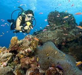 Scuba Diver (Course)