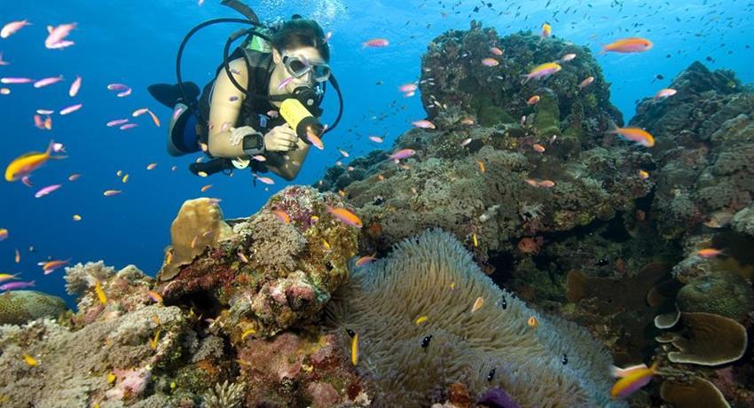 1, Scuba Diver (Course)