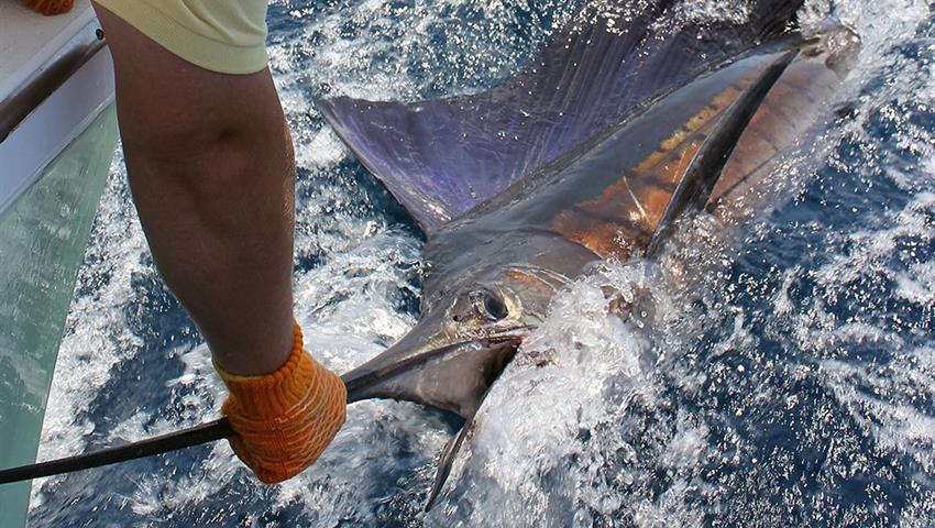 spot  4 fish, Quepos Sportfishing Full Day Tour