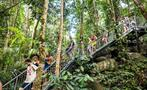 Rainforest Tours Cairns Pierre Johne stairs, Rainforest Tours Cairns