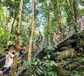 Recorrido en la Selva Tropical de Cairns
