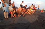 1, Release Marine Turtles Camping Trip