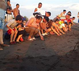 Release Marine Turtles Camping Trip, Adventure Tours in Guatemala City, Guatemala