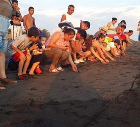 Release Marine Turtles Camping Trip