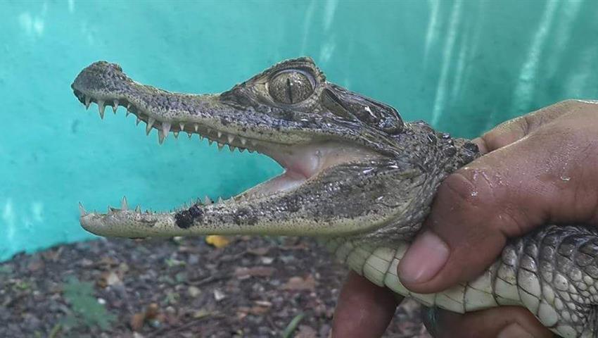 3, Release Marine Turtles Camping Trip