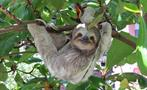 Sloth, Rio Celeste 8-Hour Hike