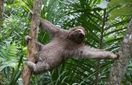 Sloth, Rio Celeste 8-Hour Hike
