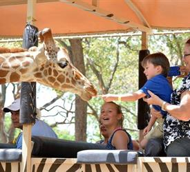 Safari and Waterfalls Tour