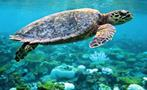 3, Beach and Snorkel Getaway Cruise to Culebra Island