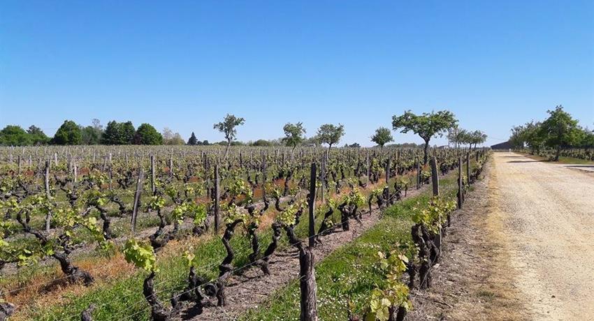Saint Emilion, Saint Emilion Wine Tour