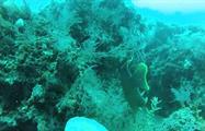 2, Buceo en Mar Caribe